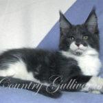 Country Gulliver's YaSon Class