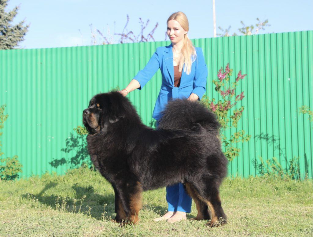 Liontari Asteri Ekosey Bo 2 year